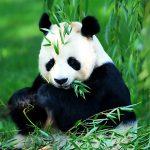 Keresőoptimalizálás és Google algoritmusok: itt a Panda 4.0